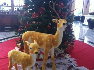 Christmas Decorations at the Bahia Princess