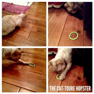 Cat-toure Hopster review by Doris the secondhand cat