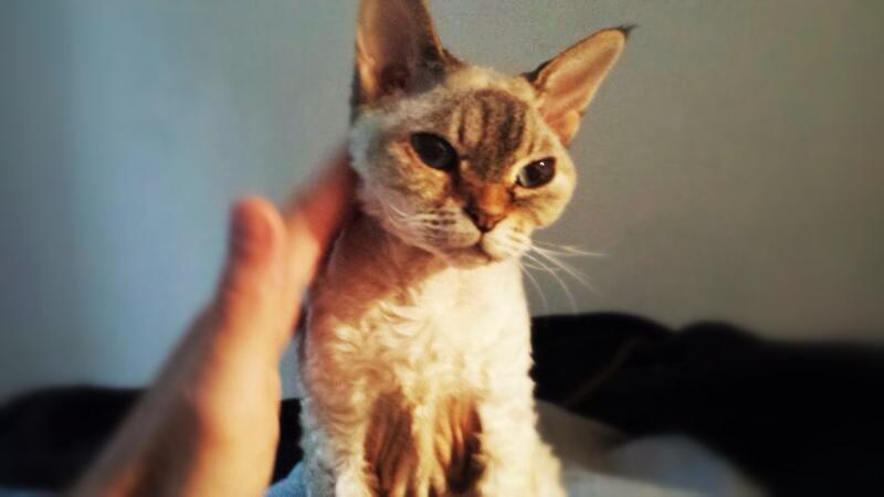 Maximising Mornings with MOMA! - Stroke a Cat